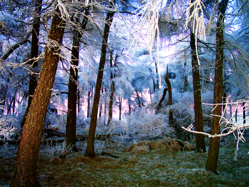 frozen-forest
