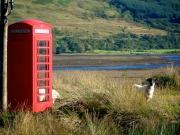 sheep-phone-home